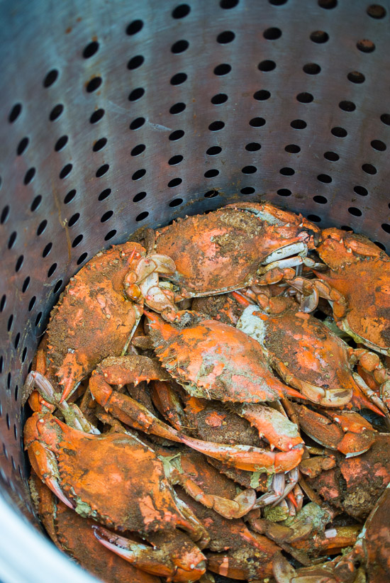 Photo Essay: Crabbing in the Chesapeake Bay